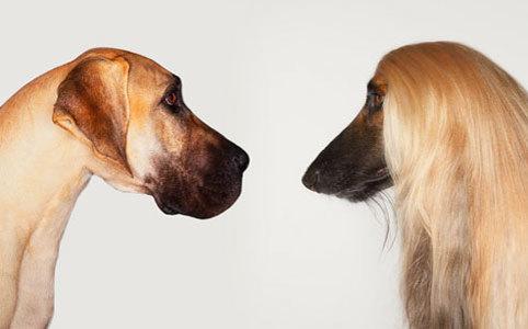 È vero che un anno per un cane equivale a 7 per un uomo? 20090930_191781