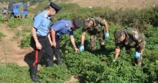 Piante marijuana in ovile, 4 arresti